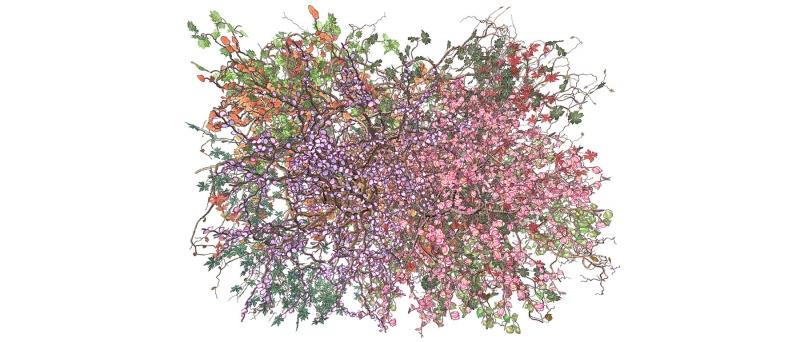 Steinkamp bouquet 1 recto 1 jennifer steinkamp (med res) (2014.07.08)