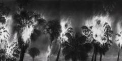 Tropicalypse