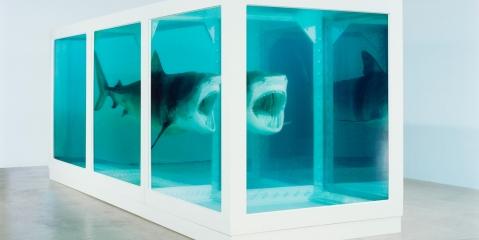 Damien hirst, shark